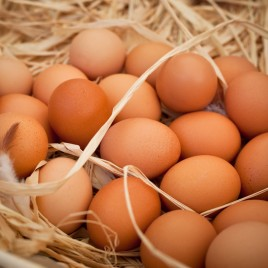 Organic Pastured Eggs $5.00/dozen
